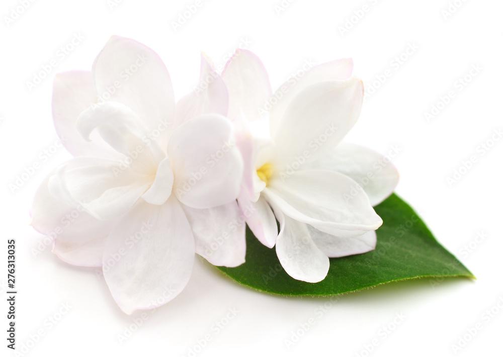 Fototapety, obrazy: Pink lilac flower.