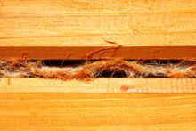 Tow Between Logs. Close-up. Ba...