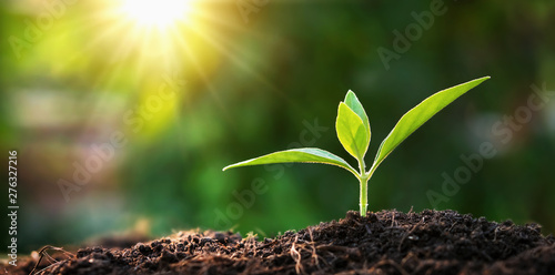 Foto auf Leinwand Bekannte Orte in Asien small tree growing in garden with sunrise. eco concept earth day
