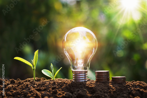 Obraz lightbulb with tree and coins on soil sunshine background concept saving energy and finance - fototapety do salonu