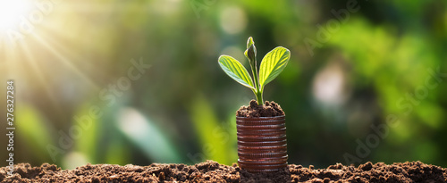 Obraz young plant grow on coins with sunrise. finance and accounting concept - fototapety do salonu