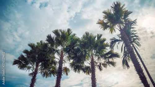 Seaside palm trees against a summer blue sky from a low angle view. (Travel, beach and holiday concept)