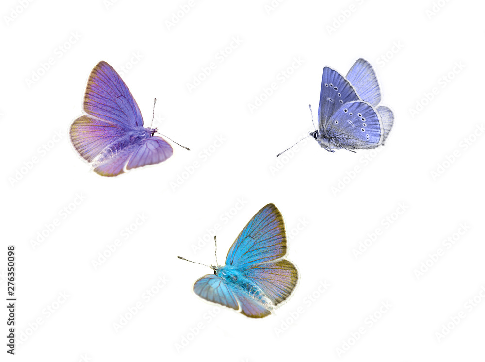 Fototapeta Flying butterfly, isolated on white background