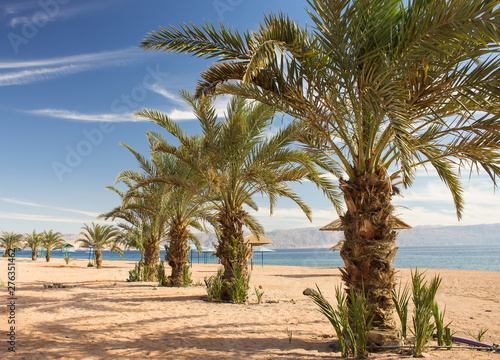 Fotografija  Saudi Arabia Persian Gulf luxury sand beach with palm trees perspective nature s