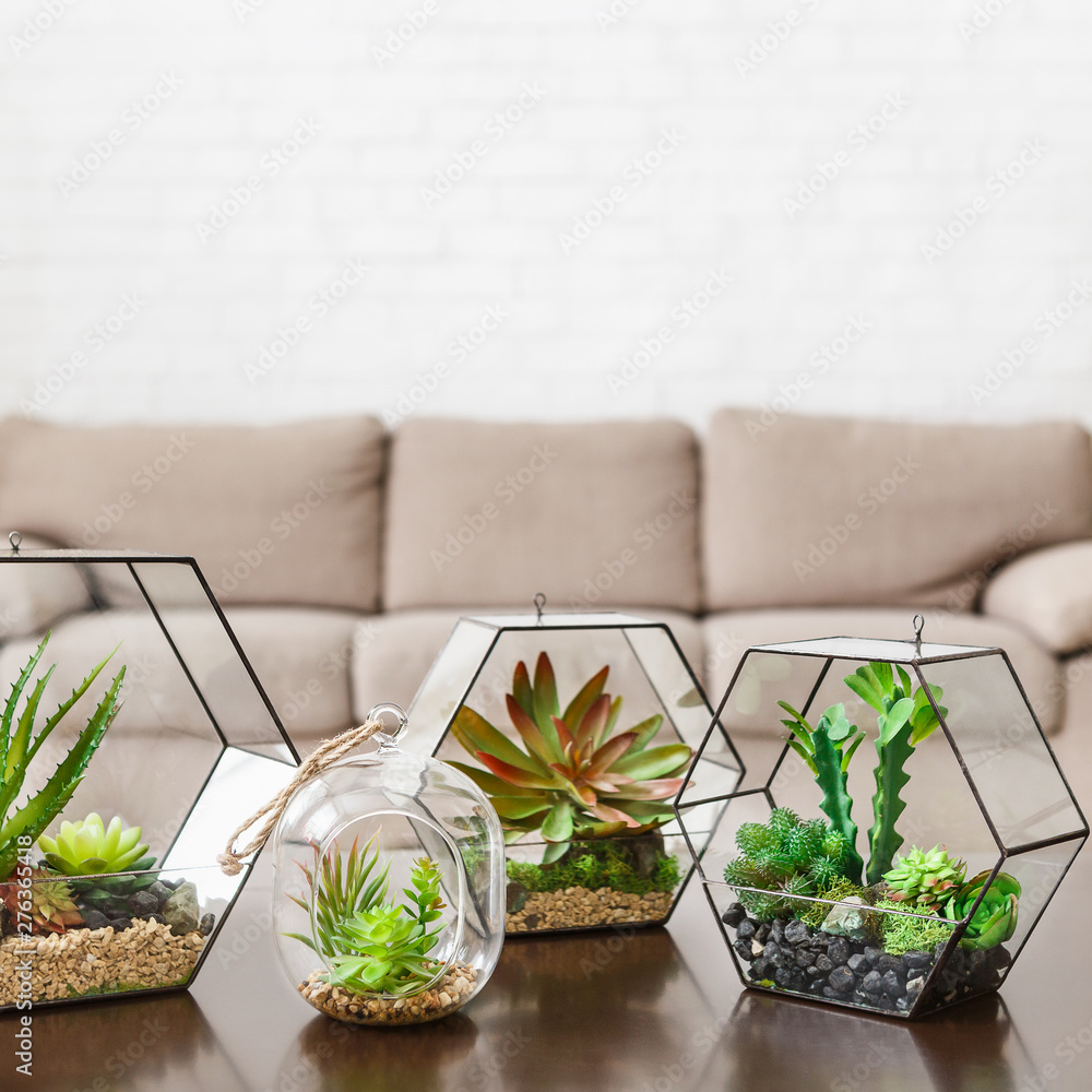 Fototapety, obrazy: Indoor plants in florarium vases on table
