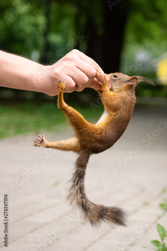 Fotografía  Squirrel bit my hand