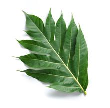 Leaf Of Breadfruit On White Ba...