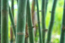 Close-up Bamboo Timber