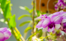 Beautiful Purple Orchids With ...