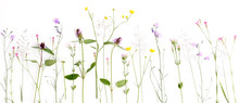 Creative Flat Lay Border Of Wildflowers, Isolated On White Background, Top View.