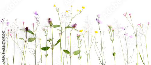 Poster Floral Creative flat lay border of wildflowers, isolated on white background, top view.