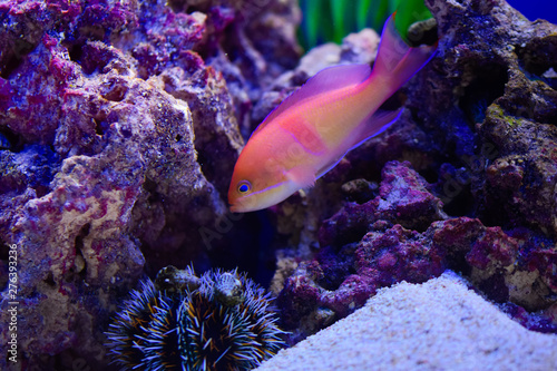 Photo Stands Coral reefs Freshwater and marine Aquarium with fish, plant, schrimp and more