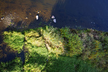 River Bank With Green Plants And Bushes, Top View On Shallow River With Large Stones