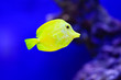 canvas print picture - Freshwater and marine Aquarium with fish, plant, schrimp and more