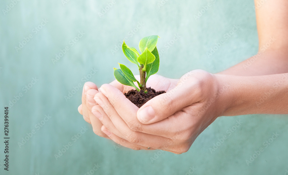 Fototapety, obrazy: Plant in hand, woman hands