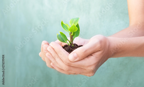 Plant in hand, woman hands Canvas