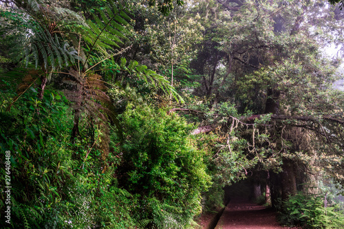 Spoed Foto op Canvas Grijze traf. Levada dos Balcoes in Ribeiro Frio, Hiking on trekking trail Vereda dos Balcoes, Forest Ribeiro Frio, Madeira Portugal
