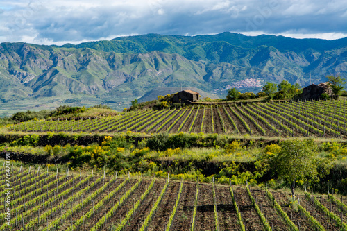 Landscape with green vineyards in Etna volcano region with mineral rich soil on Sicily, Italy