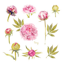 Peony Sarah Bernhardt. Isolated Set Of Vivid Pink Peonies With Double Flowers, Buds And Leaves. Watercolor Illustration.