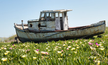Fishing Boat In Iceplant