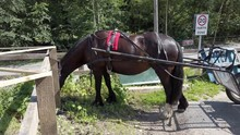 Horse & Buggy Trap Carriage Ro...