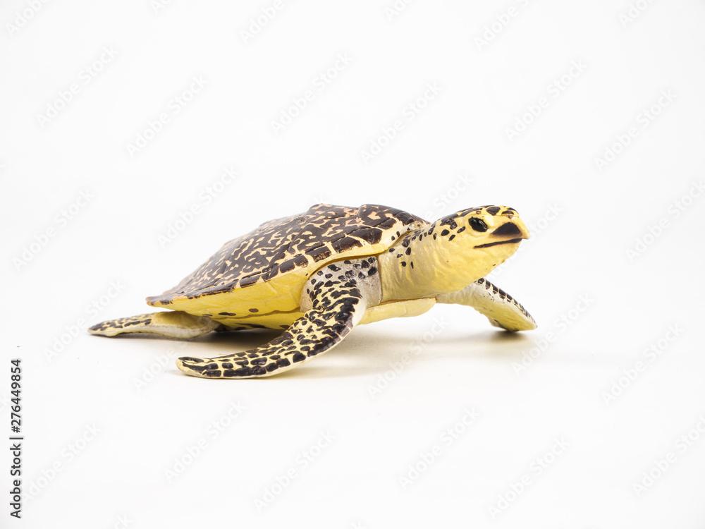 Fototapety, obrazy: turtle on white background