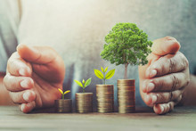 Businessman Protection Money On Table With Tree. Concept Saving