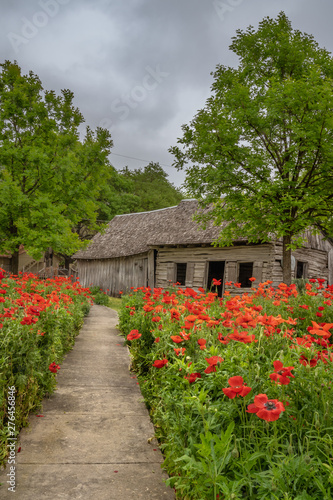 Path lined with red poppies leading building