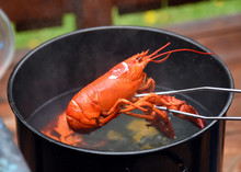 Lobster Boil With Lobster Isol...
