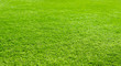 canvas print picture - Large surface of a flat-trimmed green lawn.