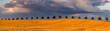 Leinwandbild Motiv beautiful storm clouds during sunset over a field of mature cereal