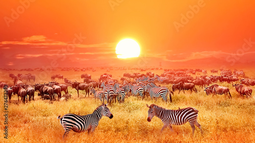 Photo Zebras and antelopes at sunset in african savannah