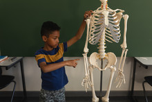 Front View Of Schoolboy Explaining Human Skeleton Model In Classroom