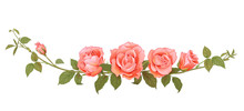 Panoramic View Bouquet Of Roses. Horizontal Branches With Pink, Red, Terracotta Colored Flowers, Bud, Green Leaves, White Background. Illustration In Watercolor Vintage Style, Frame For Design, Vector