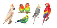 Set Of Hand-drawn Watercolor Exotic Birds. Tropical Parrots: Macaw, Cockatoo, Cockatiel, Budgie, Lovebirds