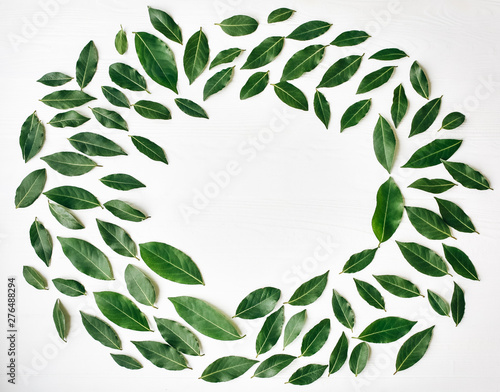 Green Leaves On White Background Spring Lifestyle Photo