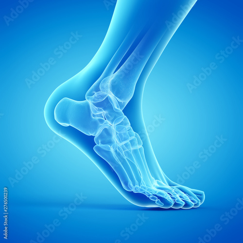 3d rendered medically accurate illustration of the bones of the foot Canvas Print