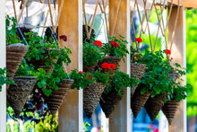 Row Of Hanging Flowers Pot Containing On The Roof For Cozy Decoration