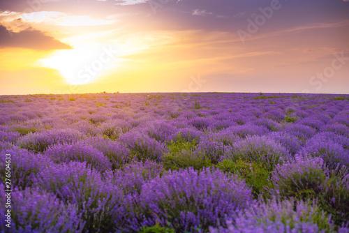Fotobehang Snoeien Beautiful Lavender field, sunset and lines. Moldova, 2019