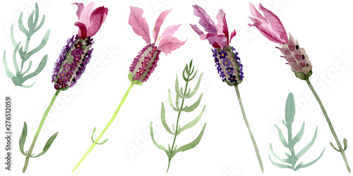 Photo  Purple lavender floral botanical flowers
