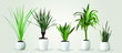 Vector set of realistic green houseplants in white pots on white blackground. Five different plants in different pots.
