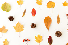 Nature, Season And Botany Concept - Different Dry Fallen Autumn Leaves, Rowanberries And Pine Cones On White Background