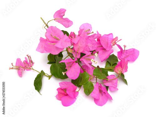 Photo Bougainvillea, also known as buganvilla bugambilia bouganvel pokok bunga kertas