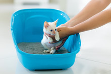 Cat In Litter Box. Kitten In T...