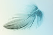 Leinwanddruck Bild - Blurred pastel feather blur, Pastel colors are simulated in feathers