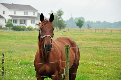Horse at Amish Farm