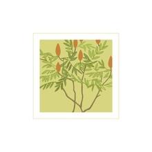 Tree Sumac.Ripe Berries Of Th...