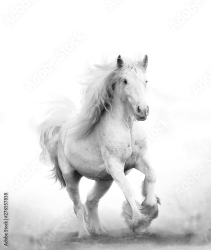Photo Beautiful snow white horse running