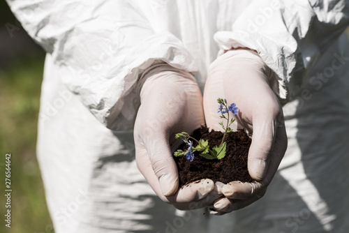 Valokuva  partial view of ecologist in latex gloves holding handful of soil with dayflower