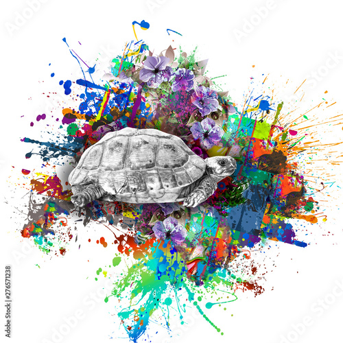 Colorful abstract background with turtle isolated on white backdrop